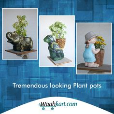 Get praise of everyone who visits your home by the tremendous look of plant pots items bought from our very own site that gives you the best of the products. Check out at www.waahkart.com  #PlantPots #Decoration #WaahKart #OnlineShoppinginIndia #Furniture #StylishDecor #BestProducts