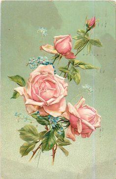 1907 pink roses postcard