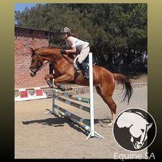 Ruby's Choice - Registered Thoroughbred - Horses for Sale Detail Thoroughbred Horse, Horses For Sale, Animals, Animales, Animaux, Animal, Animais