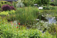 Teichpflanzen sorgen dafür, dass aus einer schlichten Wasserfläche ein schön in die Umgebung eingebundener Gartenteich wird. Ob für flache Bereiche oder tiefe Teichzonen – die Natur hält ein reichhaltiges Angebot bereit. Hier sind unsere Empfehlungen für jede Wassertiefe.