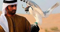 A Falcon for the New Milennium Dubai, The Beautiful Country, Beautiful Birds, Pretty Birds, First Humans, Arabian Nights, Birds Of Prey, Love Art, Cool Things To Make
