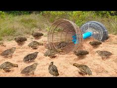 Awesome Quick Bird Trap Using Tire Car And PVC - How To Make Bird With Water Pipe Work 100% - YouTube Survival Shelter, Wilderness Survival, Camping Survival, Outdoor Survival, Survival Prepping, Survival Gear, Survival Skills, Survival Essentials, Bird Trap