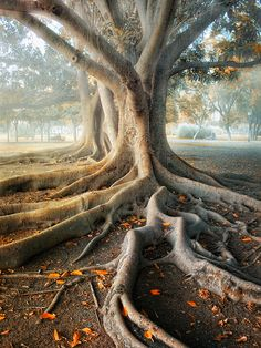 This tree. I want to be under it. Roots like veins, limbs like arms. Gotta be sacred for something.