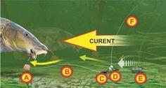 Montura LEGER, pentru pescuitul la mreană și clean.