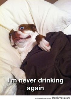 Funny Animal Pictures 5 45 Absolutely Hilarious Pictures of Animals to Make You Laugh