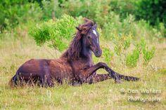 Wild Mustang Colt | Flickr - Photo Sharing!