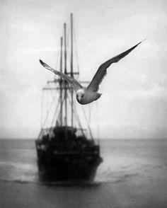 André Kertész Le Poète est semblable au prince des nuées Qui hante la tempête et se rit de l'archer ; Exilé sur le sol au milieu des huées, Ses ailes de géant l'empêchent de marcher. Baudelaire, L'albatros