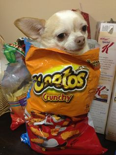 When this dog tried to act like she could pull of this Cheeto dress. | The 61 Most Awkward Moments In The History Of Dogs