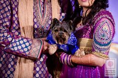 Dog in Indian wedding attire via IndianWeddingSite.com