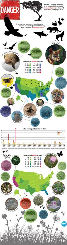 Which U.S. states have the most endangered species? #infographic #animals