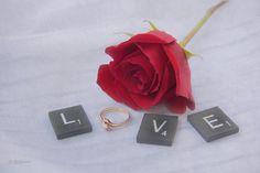 Flower Photograph - Love Rose by Pamela Williams