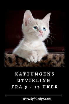 Kattungens utvikling fra 5 - 12 uker Animals, Nature, Animales, Animaux, Animal, Animais