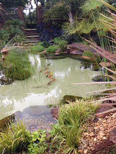 Garden ponds for sale garden oak garden Natural Swimming Ponds, Natural Pond, Natural Waterfalls, Swimming Pools, Pond Design, Landscape Design, Fountain Design, Reseeding Lawn, Ponds Backyard