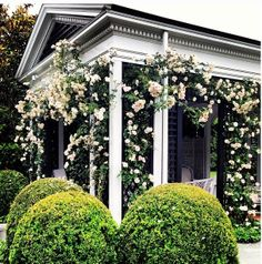 Climbing Roses & Round Topiaries