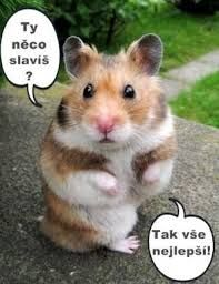 We had a very sweet Hamster she loved everyone and we always built her… – hamsters Cute Baby Animals, Animals And Pets, Funny Animals, Teddy Hamster, Hamster Pics, Bear Hamster, Animal Pictures, Cute Pictures, Syrian Hamster