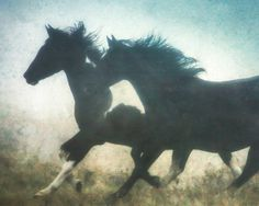 Power. Beauty.   Movement.    Title: HORSES IN FOG  Print size: 8 x10