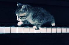 Piano-playing kitten...*SQUEAL*