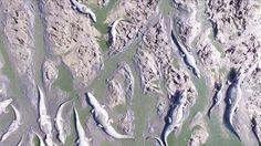 agonía de miles de yacarés por la sequía en el Chaco paraguayo - La peor sequía del río Pilcomayo en los últimos 19 años (SNT al natural)