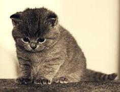 Focused Kitty