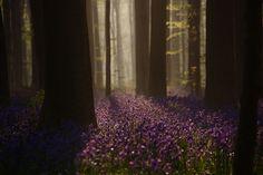 光の加減によっては、紫色に見えることも。朝、昼、夕刻とまた違った表情を見せてくれます。