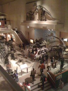 Smithsonian Museum of Natural History My Favorite Dinosaurs