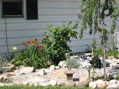 My lil pond