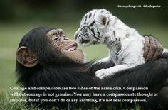 """""""Courage and compassion are two sides of the same coin. Compassion without courage is not genuine. You may have a compassionate thought or impulse, but if you don't do or say anything, it's not real compassion."""" ~ President Daisaku Ikeda www.ikedaquotes.org"""