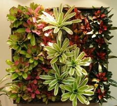 Bullis Bromeliads products - living wall