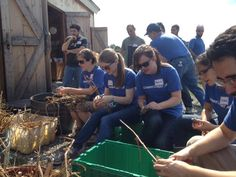 Constant Contact employees volunteering at Waltham Fields Community Farm!