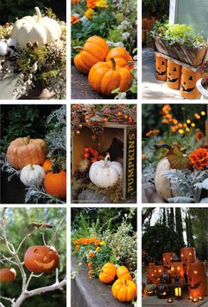 It is my personal belief that you can never have too many garden pumpkins.