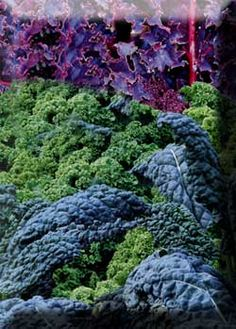 The Best Kales - Start this cold-hardy crop now for sweet soups and salads this winter.
