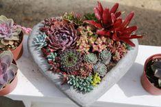 Floral style succulent arrangement in heart pot Valentine's Day Flower Arrangements, Succulent Arrangements, Succulents Online, Succulents In Containers, Container Design, Valentines Day Hearts, Floral Style, Rosettes, Container Gardening