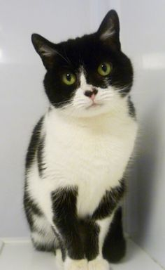 This is five year old Binki, a sweet little thing who's still finding her feet, but with just a bit of reassurance and a gentle stroke her affectionate personality will shine through! If you can offer Binki a quiet home where she's the only cat, please visit www.themayhew.org/binki and fill in your details!