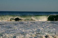 Sea Blanket:  Taken at Ninigret National Wildlife Refuge in Charlestown Rhode Island.
