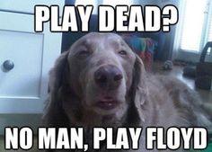 Just Play Floyd Man!