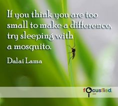 If you think you are too small to make a difference, try sleeping with a mosquito. Dalai Lama Deadliest animal ever          You can make a difference no matter how powerless you feel.     Ever been faced with a problem or a situation that seems so overwhelming that you don't even know where to start?     Have you ever