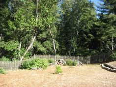 Fenced Backyard - Center view