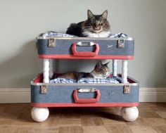 Vad gillar katter att göra bäst? Sova, så klart! Här är 8 fyndiga tips på hur du fixar en mysig sovplats till din kära familjemedlem.