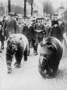 Circus bears are taken for a walk in the street of Berlin followed by curious children. Photo, after 1920 (Max Gerlach).