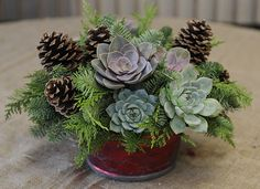 succulents and pine