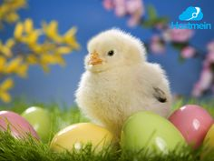 Βρισκόμαστε στο μέσον της Μεγάλης Εβδομάδας, την Μεγάλη Τετάρτη, η ομάδα της Hostmein σας εύχεται Καλό Πάσχα και καλές γιορτές!