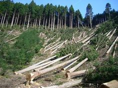 Every tree we chop down destroys the home of an animal...not too mention the fresh air we are losing.