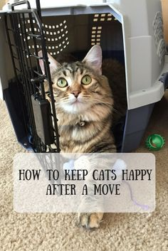 Airing My Laundry, One Post At A Time...: How To Keep Cats Happy After A Move