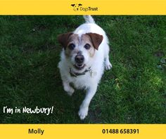 Molly at Dogs Trust Newbury loves to play with her toys and enjoys her walks. She is still a very active girl. Dogs For Adoption Uk, Dogs Trust, Animal Rights, Walks, Cute Animals, Play, Toys, Pretty Animals, Activity Toys