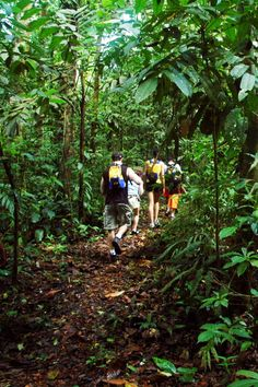 Playa Nicuesa Rainforest Lodge - Golfito, Costa Rica - The 165-acre preserve is scored with a wild hiking trails.