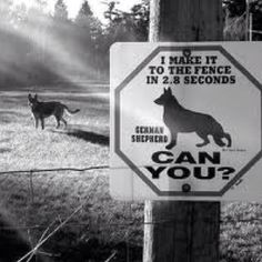"""This sign has proven to be 87% more effective than your standard """"Beware of Dog"""" sign"""