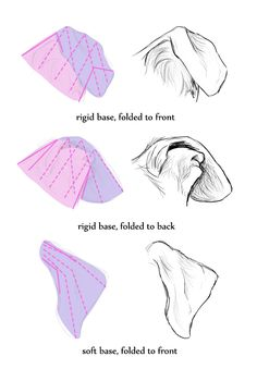 How To Draw Dog Ears