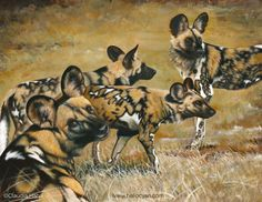 'The colours of Africa' (African wild dogs) by Claudia Hahn.  Finally the last painting is finished for the TWASI wildlife art exhibition which starts on Friday the 22nd of May. Acrylic on paper, it measures approx 17.5″ x 22″.  The African wild dogs (also known as 'painted dogs') are carnivores native to the open areas of Sub-Sahahran Arica. I love their distinctive fur markings, in my eyes they really represent the colours of Africa.