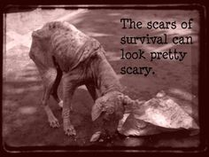 THE SCARS OF SURVIVAL CAN LOOK PRETTY SCARY. I always carry small bags of dog & cat food, bottled water, blankets, collar, & leash stored in a pet carrier every time I pull out of the driveway. You never know when you'll find a furchild starving, cold, lost or abandoned. It's a real comfort to know I can help-even a little-than to have nothing with which to help save a life. It's not expensive but it's worth it's weight in gold if you need it AND have it with you. Consider it for your…