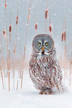 Looks like mad owl